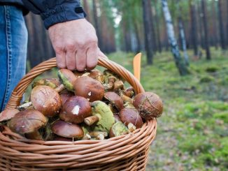 Правила по сбору грибов
